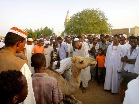 Camel Sacrifice in Sudan