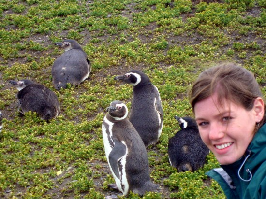 Tierra del Fuego, Patagonia: at a penguin nesting site.