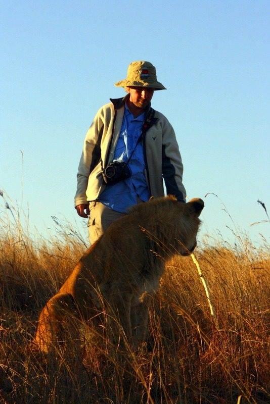 The lion walk in Antelope Park, Zimbabwe.