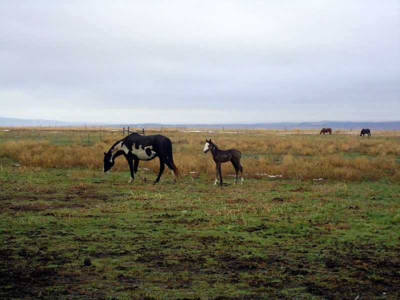 Some of the horses on Mark's supervisor Ronda's ranch. The little one is named Jenny, after the previous Americorps VISTA that Mark replaced.