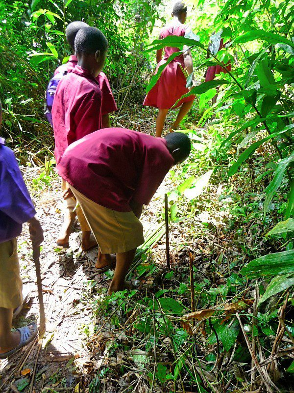 Students planting trees in the rainforest.