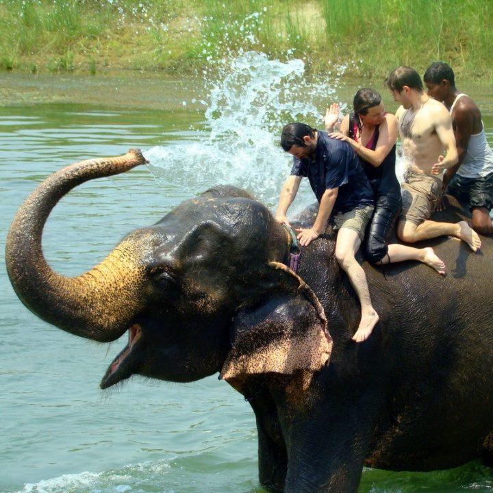 An elephant bath at Chitwan National Park, Nepal.