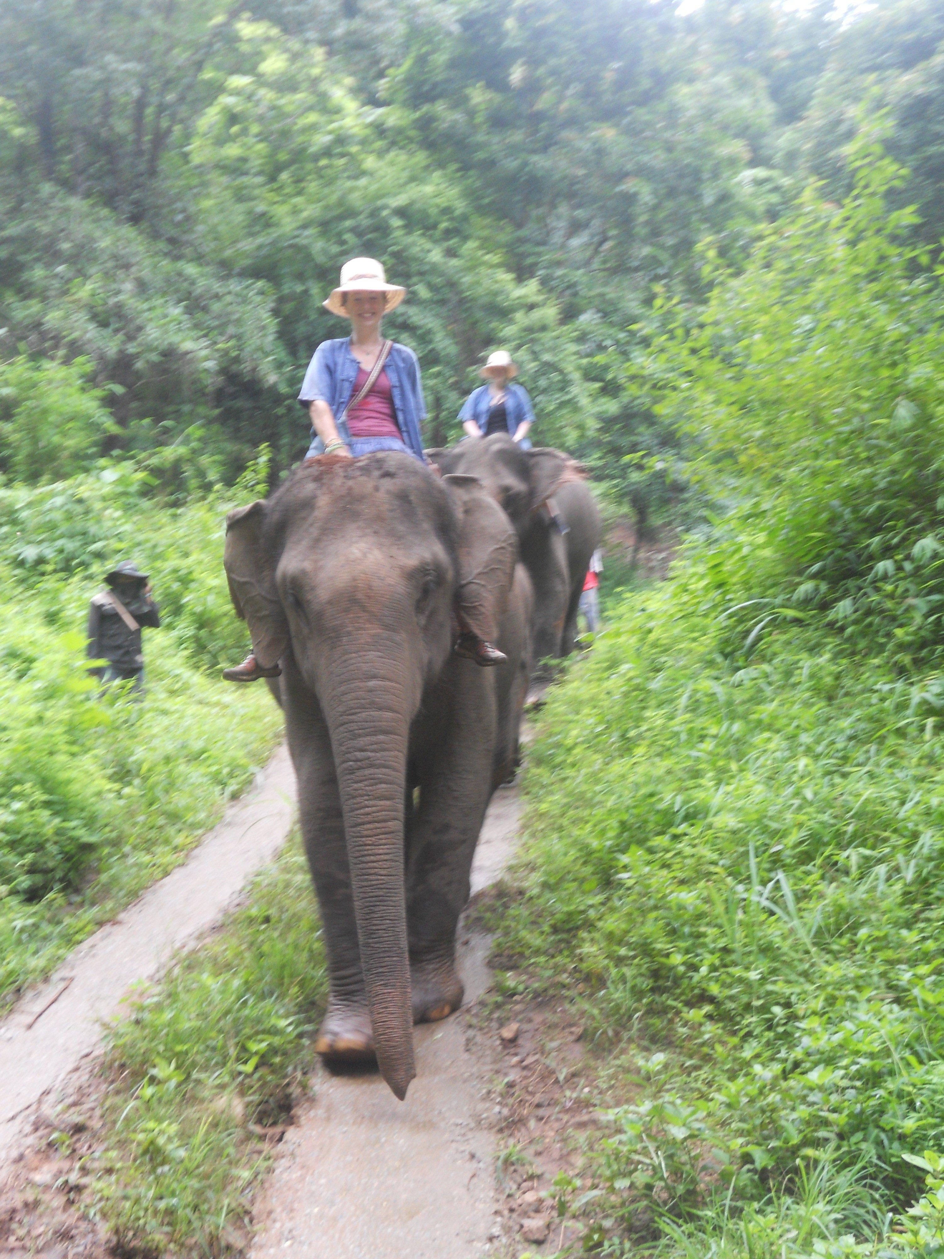 Volunteering with elephants in Thailand.