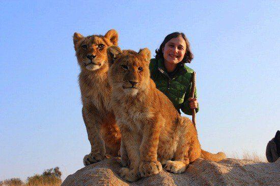Lions Zimbabwe GEEO