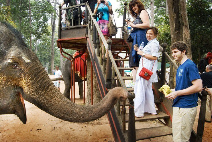 Feeding and Riding the Elephants at Angkor Wat, Cambodia.