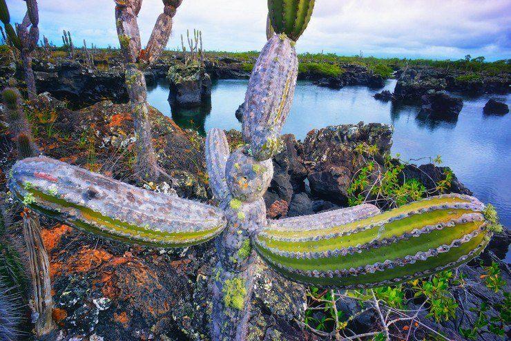 Isabella, Galapagos.