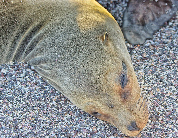 A seal in the Galapagos.