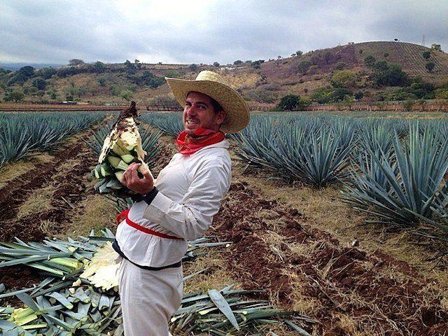 A job as a Tequila farmer?!