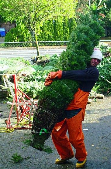 A job as a Christmas tree salesman?!