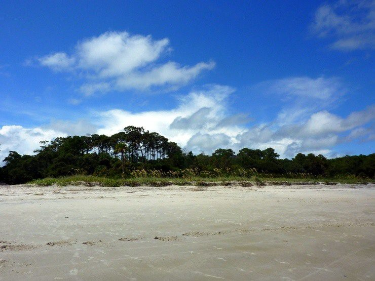 Stretch of beach along one of the Lowcountry's barrier islands.