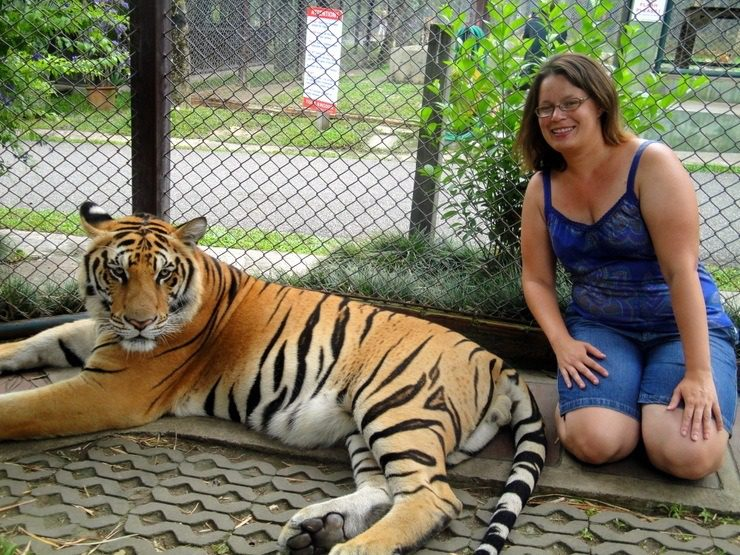 """Chiang Rai, Thailand: """"It's the eye of the tiger!"""" There was no quick escape- the fence was electrified behind me. One of the posted rules: Don't stick hands or fingers inside the cages. Ironically, you could go in the cages and take photos with the animals."""