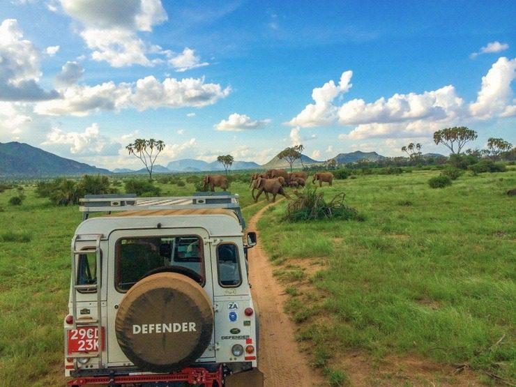 One of the many elephant sightings Haleigh experienced during their Kenyan Safari through Samburu National Reserve.