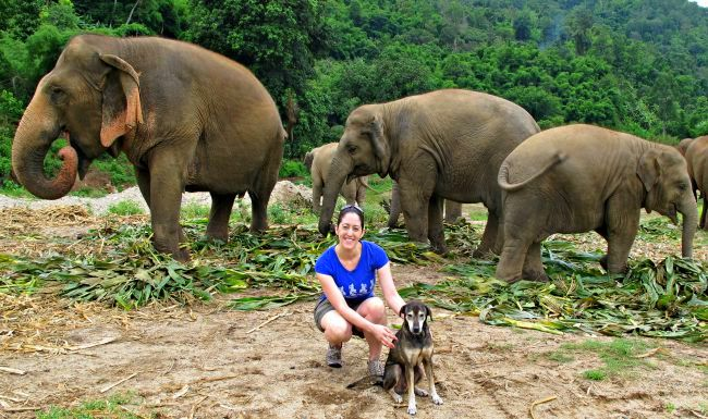 Elephant Nature Park, Thailand, with the elephants and one of the rescued dogs named Ahn.