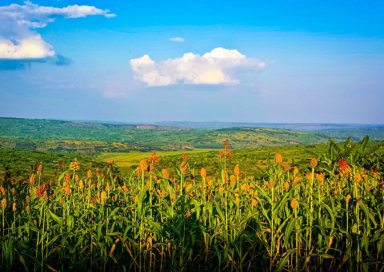 Beautiful fields in Rwanda. Where will YOUR travels take you?