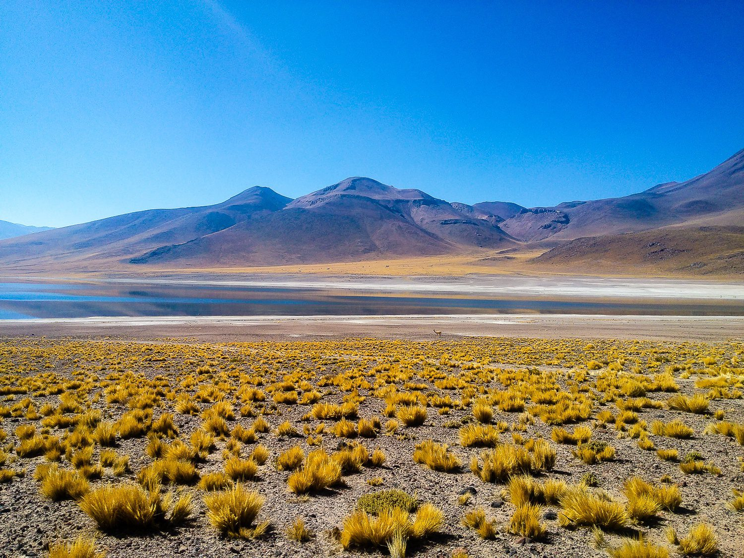 Atacama, the world's driest desert, which is located in Northern Chile.