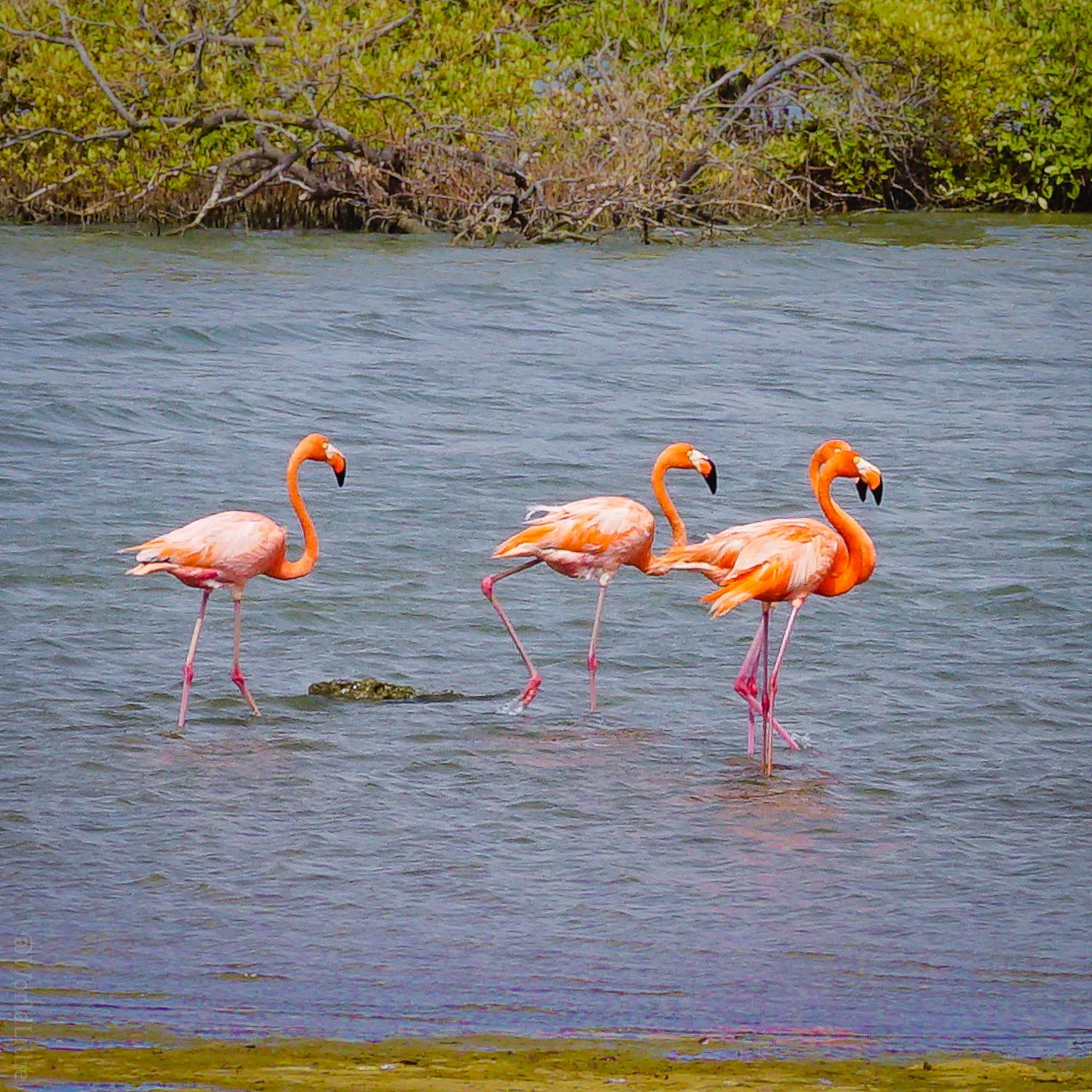 These Bonaire flamingos are happy you're here!