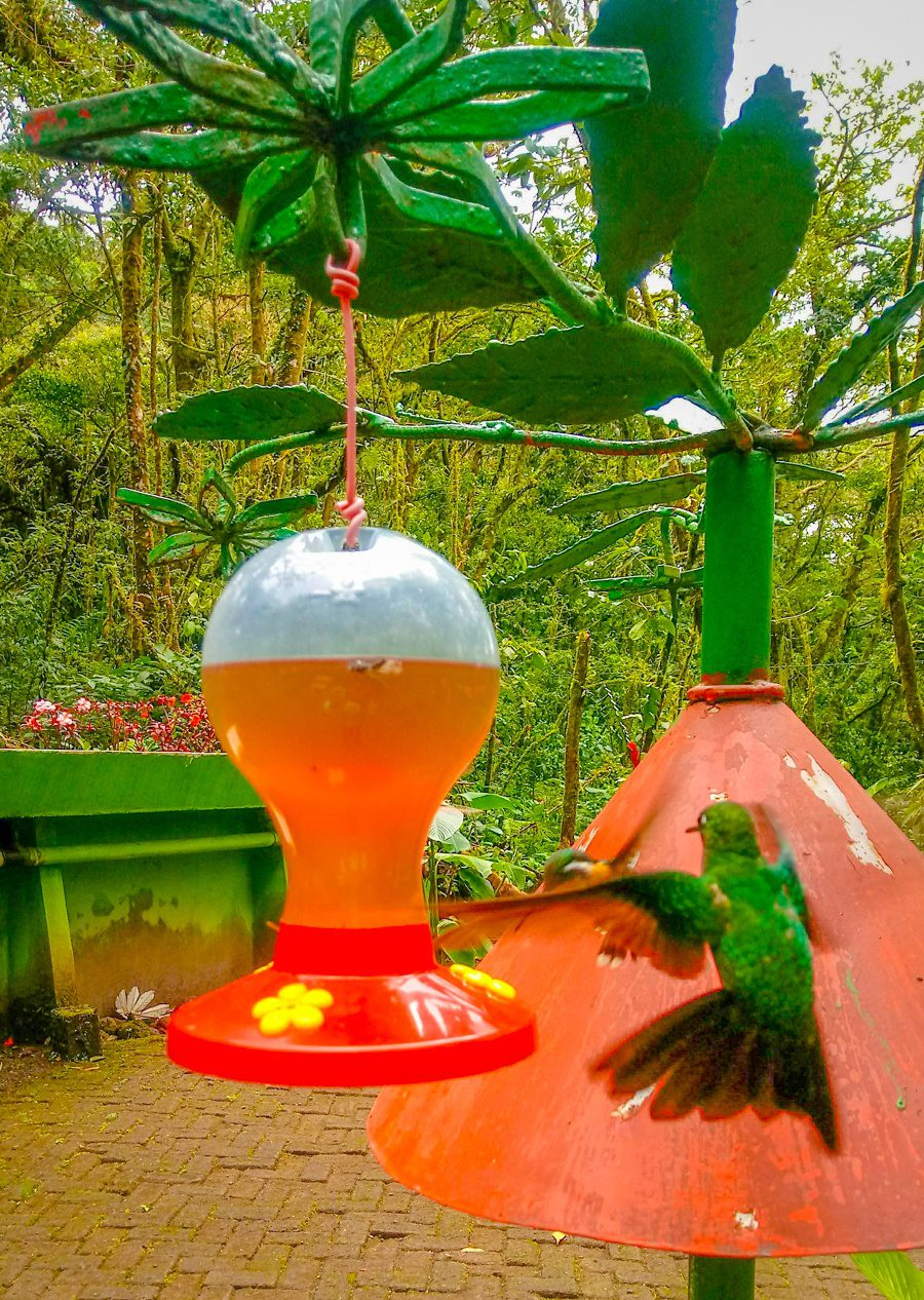 Great tips on small group travel, responsible travel, and adventure travel in Costa Rica (and beyond!) via the tale of white water rafting in La Fortuna! Inspiring and fun interview. Pictured: a hummingbird.