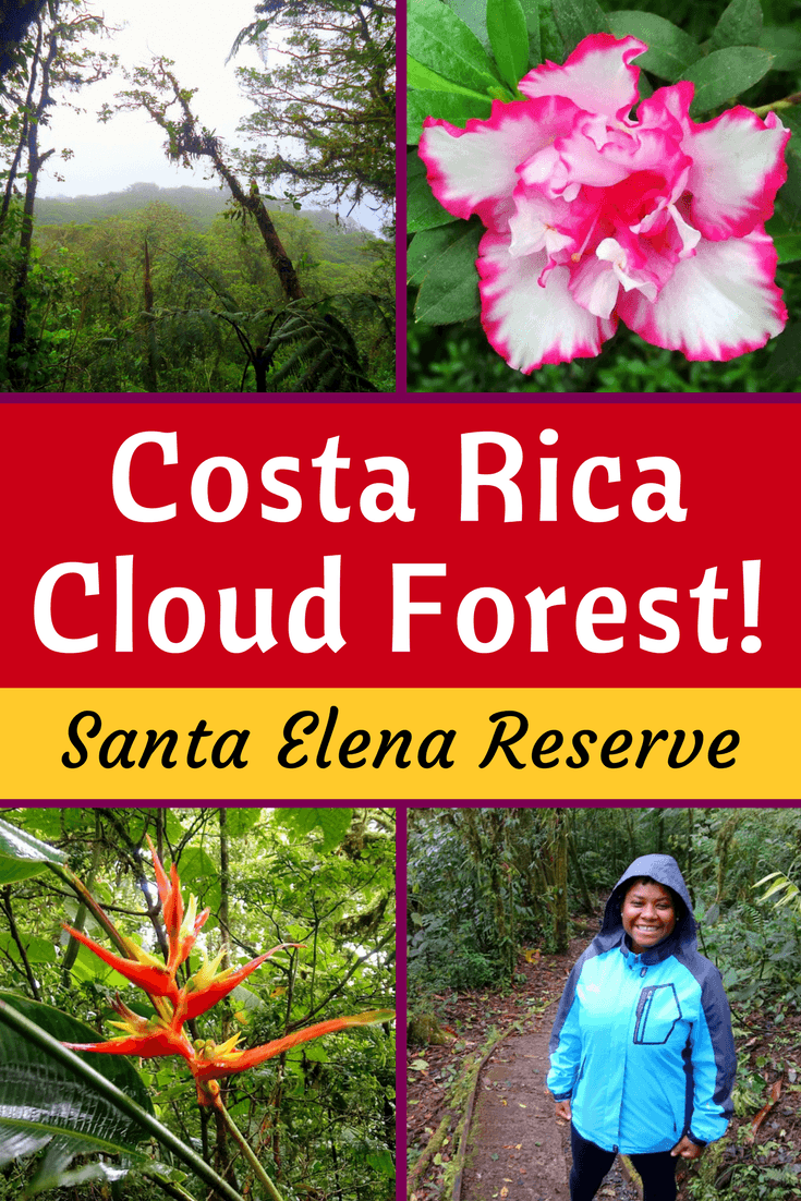 Why the Santa Elena Cloud Forest Reserve near Monteverde, Costa Rica is Educational and Ecotourism Travel Gold.