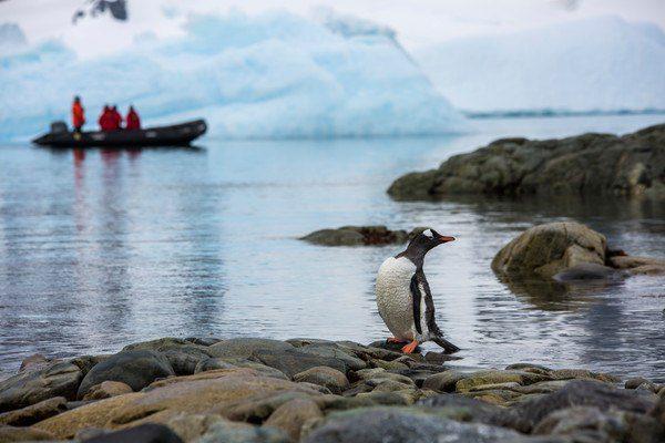 A Ronge Island penguin in Antarctica.