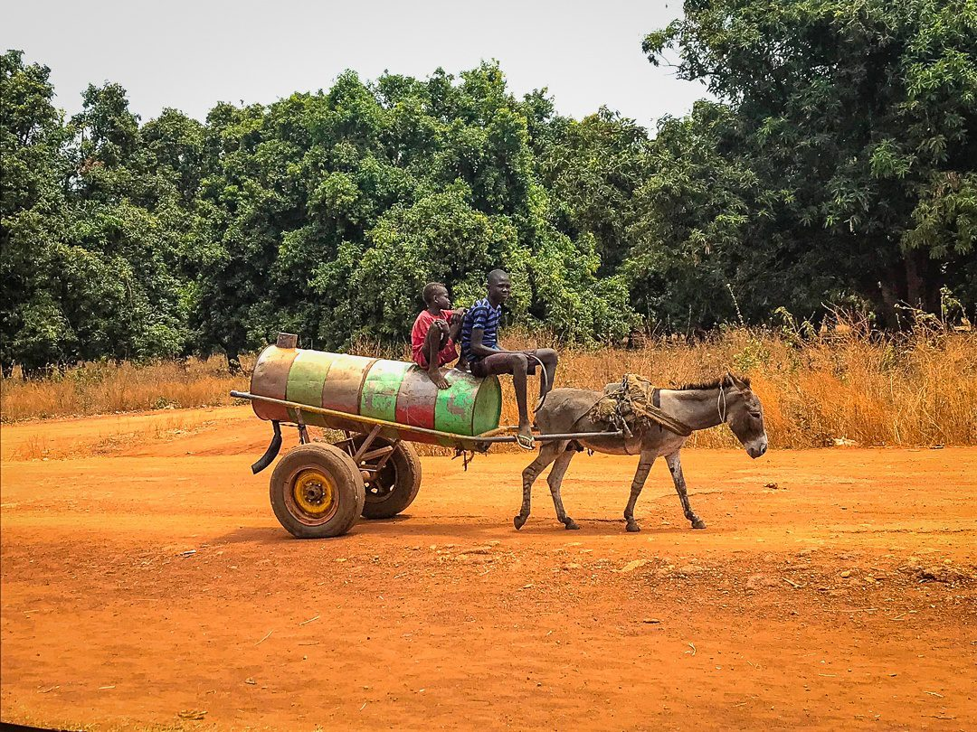 Donkey delivery of water near Wau.