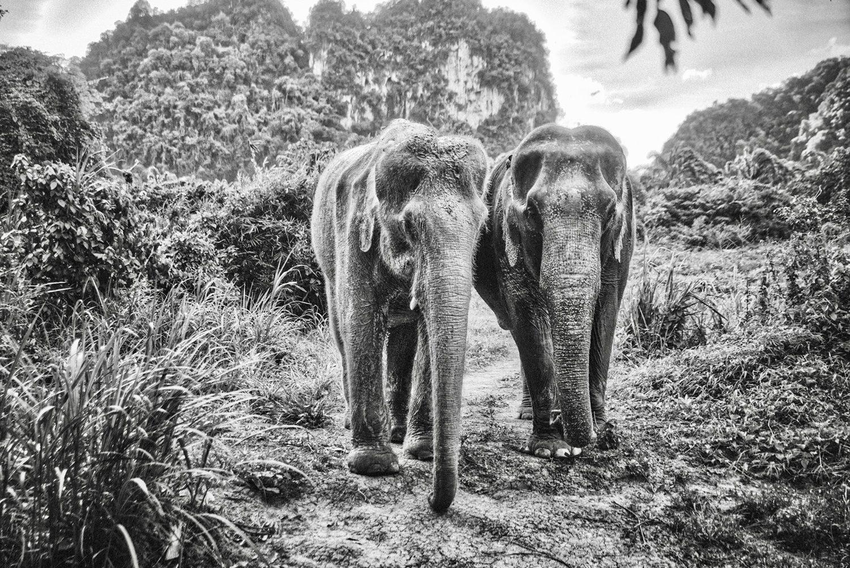 Elephant Sanctuary in Krabi, Thailand.