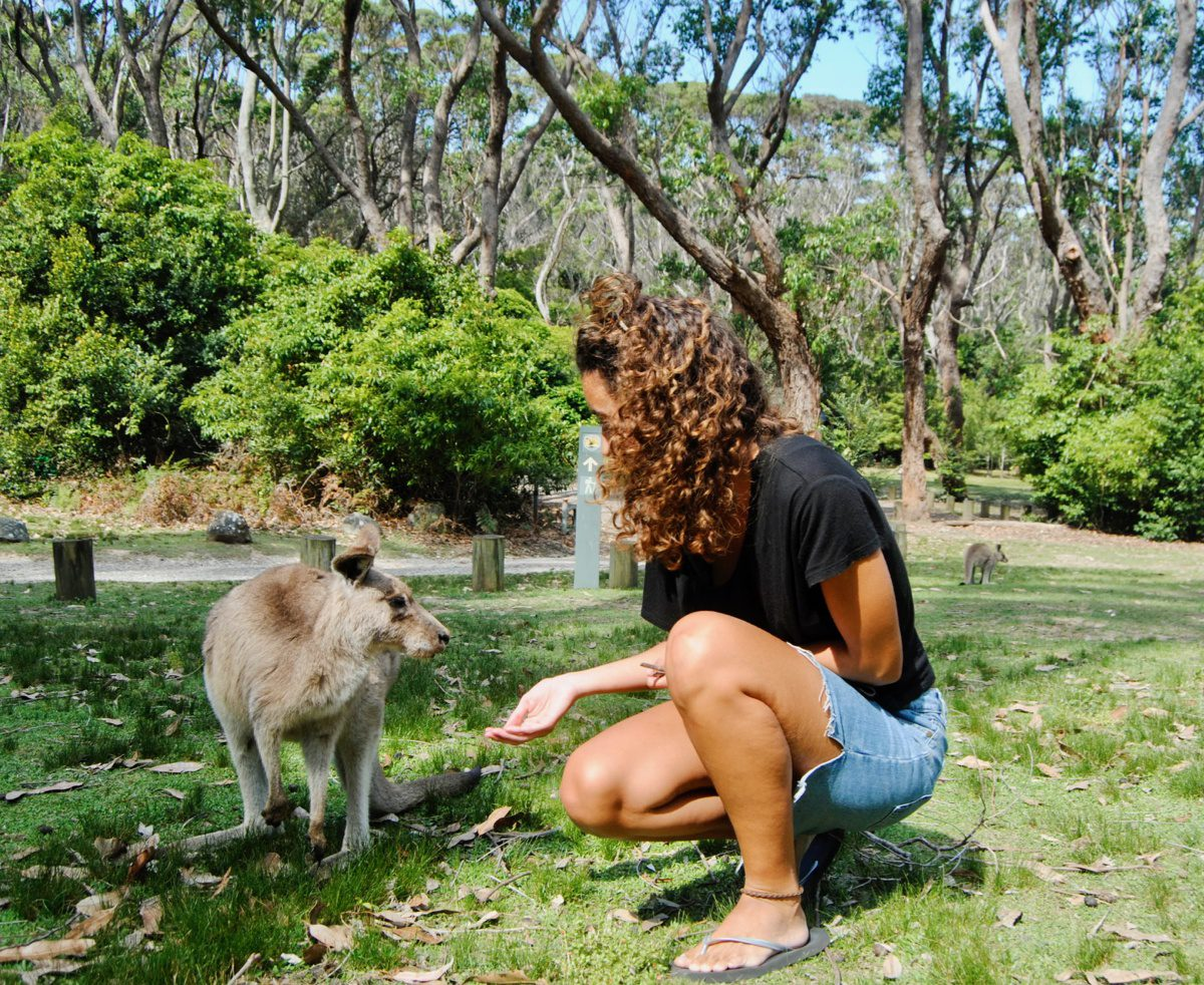 Playing with kangaroos by the beach.