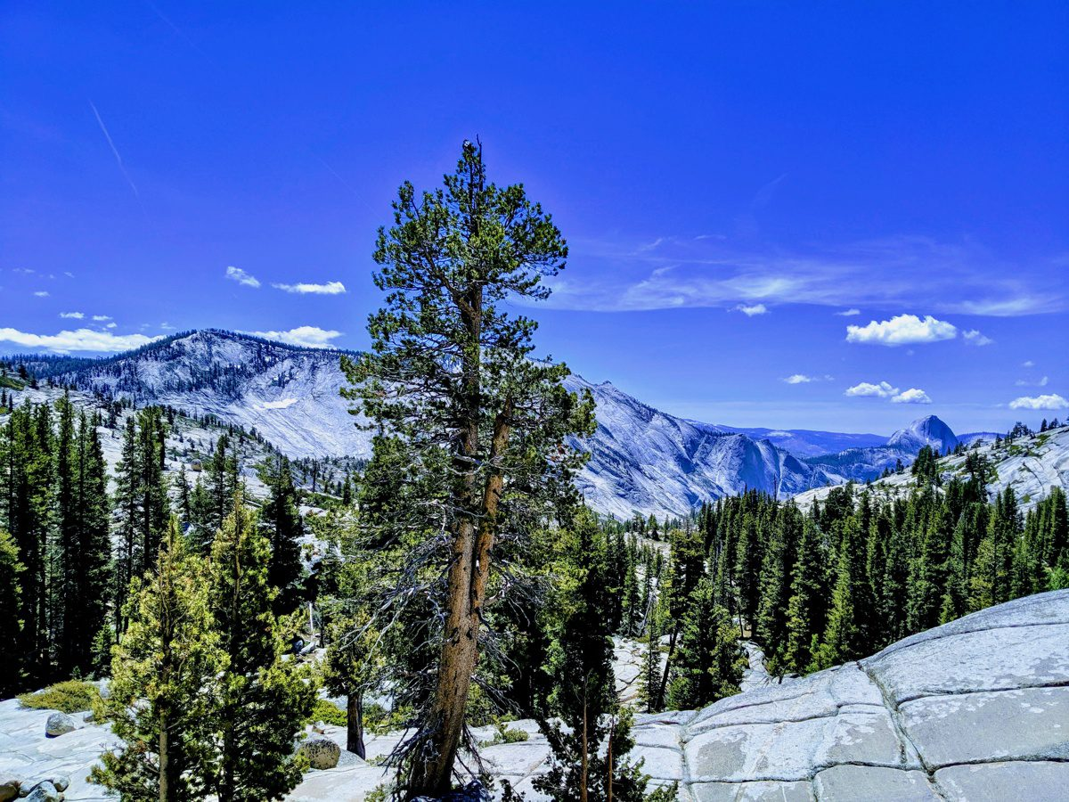 Yosemite tour